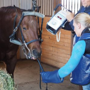 DentiPod Intraoral Dental Radiography for Equine, for use with Cattro Hub