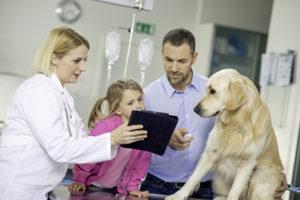 Veterinary Clinic Exam Room