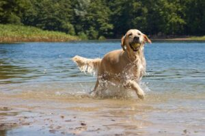 Dog playing with ball in lake