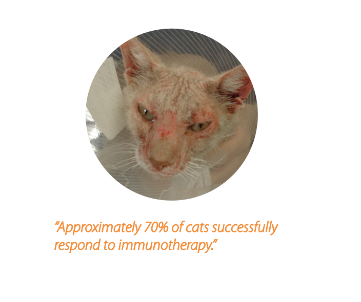 Approximately 20% of cats successfully respond to immuotherapy.