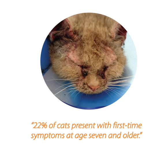 22% of cats present with first-time symptoms at age seven and older.